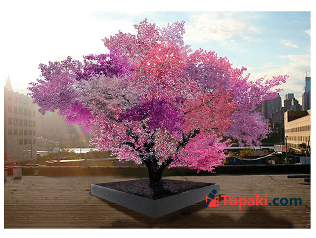 A single tree yielding 40 different kinds of fruits? Nuts!