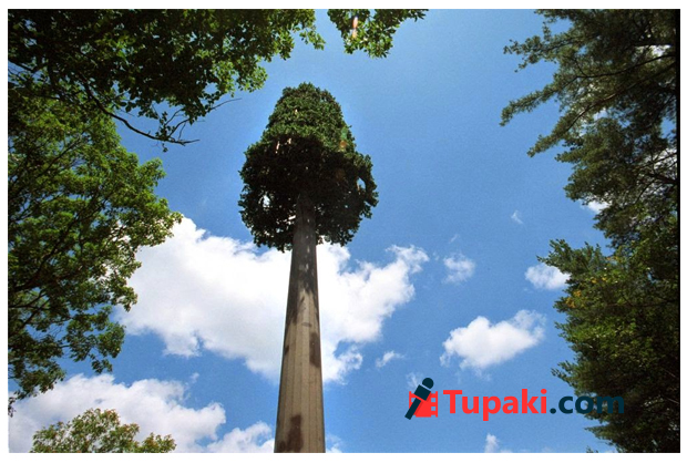 Cell towers like trees in andhra Capital