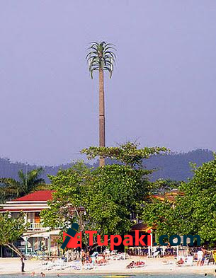 cell tower like coconut tree at medchal ring road