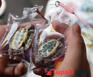 Live Animals Are Stuck Inside These Plastic Keychains