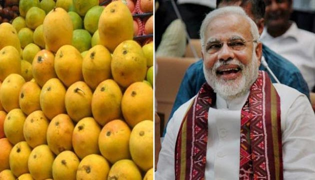 Modi Mangoes, Weighing 450 Grams, Feature At Mango Festival