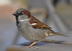 45 days Without electricity for a Single Sparrow