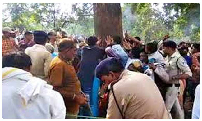 Mystery of magical Mahua healer tree in Madhya Pradesh jungle