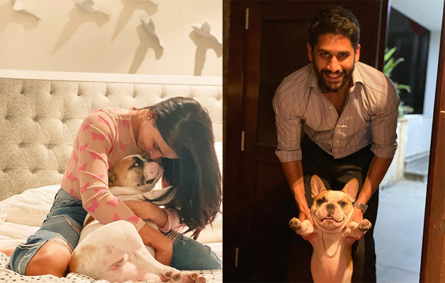 Who is new Person in Akkineni Family?