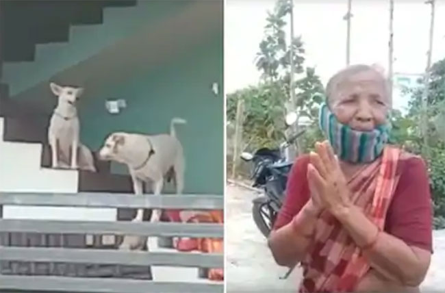 railway employee let his dogs onto elder woman in Piduguralla