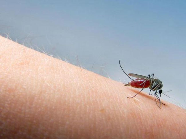 Mosquitoes taste blood and call it if they like it!