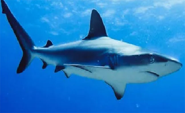 Should millions of sharks be killed for the vaccine?