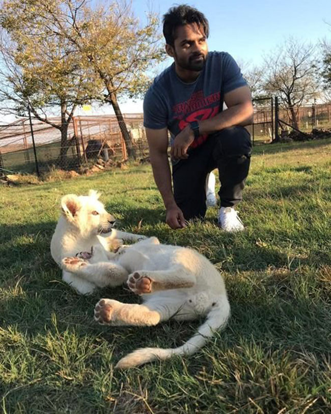 Sai Tej special pic with tiger cubs