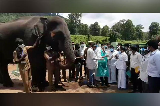 Samples of 56 elephants from Tamil Nadu sent for Covid tests!