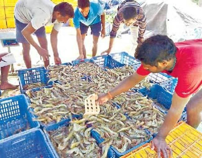 China conspiracy against India aqua sector