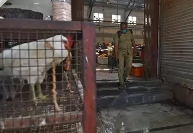 The first death in the country with bird flu
